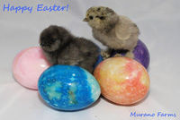 Something cute that's sooo going into my Easter screensaver!