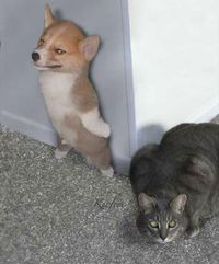 Funny animal 03 Photo: This Photo was uploaded by tsai tsai family. Find other Funny animal 03 pictures and photos or upload your own with Photobucket f...