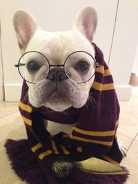 Thispostwas discovered by trixie + peanut: gifts for pets + people. Discover (and save!) your own Pins on Pinterest. | See more about halloween costumes, french bulldogs and dogs.