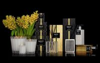 Grapefruit Fragrance Collection by Nest $42.00