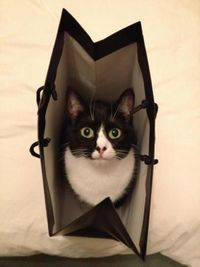 Don't you think this bag looks good on me? Click to understand your cat's behavior.