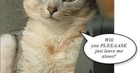Very funny images cat