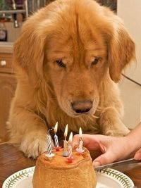 birthday cakes, puppy birthday and dog birthday.