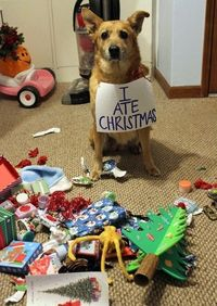 The 35 Naughtiest Dogs On The Planet. You'll Laugh So Hard When You See What They Did!