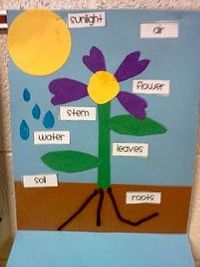 parts of a plant/things they need to grow activity - THE PLANT WORLD UNIT. #ECMontessori