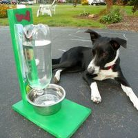 Keep your pet happy and hydrated with this simple build.