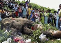 chekhov: tyrannia: peace-love-hippieness: wild-soulchild: sea-sidee: People leave flowers/offerings for a dying elephant so much respect, something humans need more of�€�xx Aww I THINK IT WOULD RATHER HAVE MEDICAL ATTENTION THANK YOU I ALWAYS THINK ...
