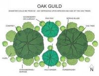 Edible plants for around oaks.