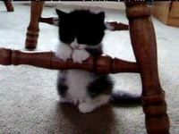 Cute kitty tries to sleep standing up.