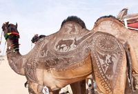 Shaved camel art at the Bikaner Camel Festival in Rajasthan, India | saving for future creature design reference!