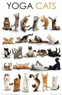 Thispostwas discovered by Deborah Olmedo. Discover (and save!) your own Pins on Pinterest.   See more about yoga cat, yoga and cats.