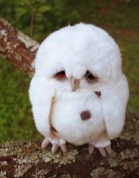This is the saddest owl I've ever seen!!!
