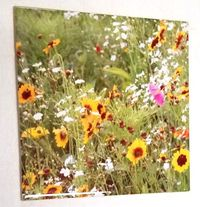 6x6 Wild Flowers, Ceramic Tile, Home Decor Decoration Art Accent Gifts for Him Gifts for Her, Decorative, Coasters $15.99