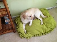 DIY doggy bed/floor pillow! sooo easy! no sewing! step by step!