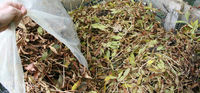 Don't forget to collect, store, and water your fall leaves to make leaf mold mulch for spring. 5 pt leaves to 1 pt. green.