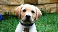 """There's nothing like a puppy to bring a smile to your face. And, what's better than one puppy? How about the """"Top 10 Cutest Puppies"""" presented by the Daily Pupp"""