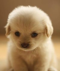 I don't even have a category for this little guy but I couldn't notpostit! Cutest little face i've ever seen:)