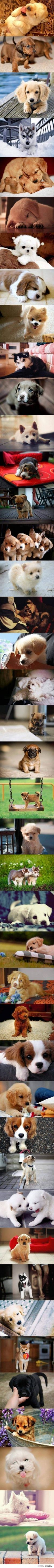 im sorry i know this has nothing to do with disney but i just couldnt resist there so darn cute!
