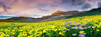 valley of flowers attractions.jpghttps://allseasonsz.com/uttarakhand/valley of flowers/valley of flowers attractions.asp