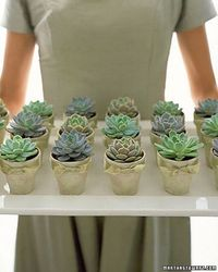 Succulents, although previously a seemingly unextraordinary plant, are all the rage in interiors, exteriors, and even wedding styling these days. It...