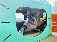 Feline Loft was specially designed for the well being of your cat. Not only is our Feline Loft safe your cats, it is also safe for our planet. One Feline Loft might not be enough for your feline friend. Make an even bigger loft for your cat by adding and ...