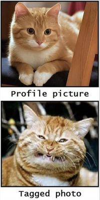 profile pictures
