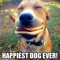 Happiest Dog Ever Funny Dog Eating Cheese Burger Whole