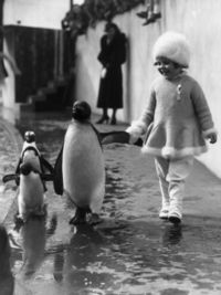"""A little girl holds a penguin's flipper as they walk together around the London Zoo, 1937"""