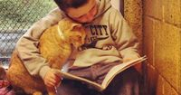 A collection of photographs of children reading to shelter cats is melting hearts throughout the world. In one image a boy is fully absorbed in his book with a