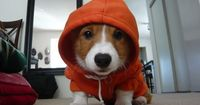 what R U looking at..because if U R looking at me..I am looking at U..now what..a dog in the hood asking questions