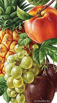 �˜лл�Ž��'�€а�†ии дл� линейки �оков ROTTALER. by INORAMA illustrators #fruits