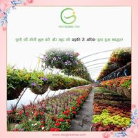 Start your own successful nursery business in India under the guidance of agriculture specialist at Star Global Star. It is one of the most beneficial business that you can even start in your backyard.