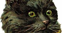 Here's a wonderful Free Black Cat Image! This is an old Victorian Die Cut Scrap piece.