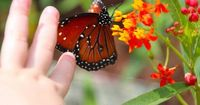 Even the Disney butterflies know how to make magical moments!!