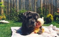 5 Things Your Dog Loves (that you probably didn't know)