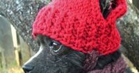 Tuggie needs this on days like this! RED APPLE Hand Knit Dog hat Photo Prop by anywear on Etsy, $22.00 How DARLING is that? oh i can see me getting this on chloe NOT