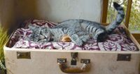 DIY cat bed made out of an old suitcase