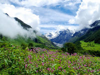 Valley of Flowers is located on the upper extension of Bhyundar Ganga, Zanskar range of the Himalayas in Chamoli District of Uttarakhand.