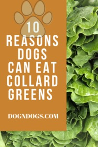 10 Reasons Dogs Can Eat Collard Greens.png