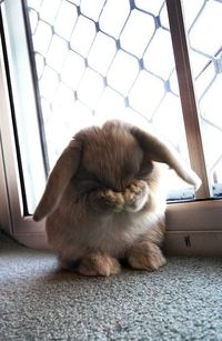 Awwwww!! I want a bunny to cuddle and snuggle and pet and love.