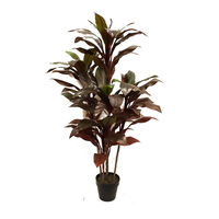 1.5M DRACENA PLANT WITH 80 LEAVES