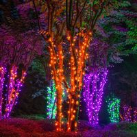 Wow! Wrap trees with amber/orange, purple and green LED string lights and the result is a spellbinding electric forest! Can we leave these Halloween lights up all year?!