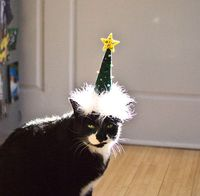Christmas Tree Cat Hat via Etsy.