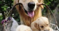 Mommy and babies <3