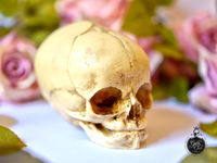 Skull replica - real size resin fetus skull aged bone color - Goth Oddity home decor or craft supply. - $29.50