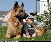 Beautiful German Shepherd dog and baby. Don't worry kid, I've got your back! For more cute dogs and puppies