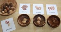 Nuts http://countingcoconuts.blogspot.com/2011/03/nut-sorting-nomenclature-printable.html