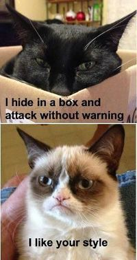 I hide in a box and attack without warning! I like your style!