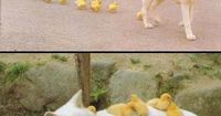 Tumblrs Best Funny Pictures Follow